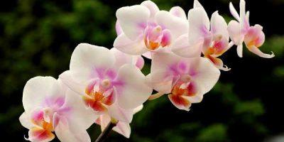 GUEST POST: Quer Cultivar Orquídeas? Siga Esses 3 Passos e Facilite Sua